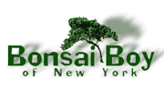 Bonsai Boy Of New York - BonsaiBoy.com screenshot